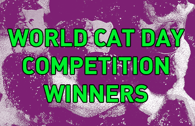 World Cat Day :: Cat Competition Winners