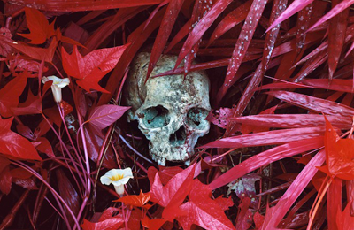 Richard Mosse :: The Enclave